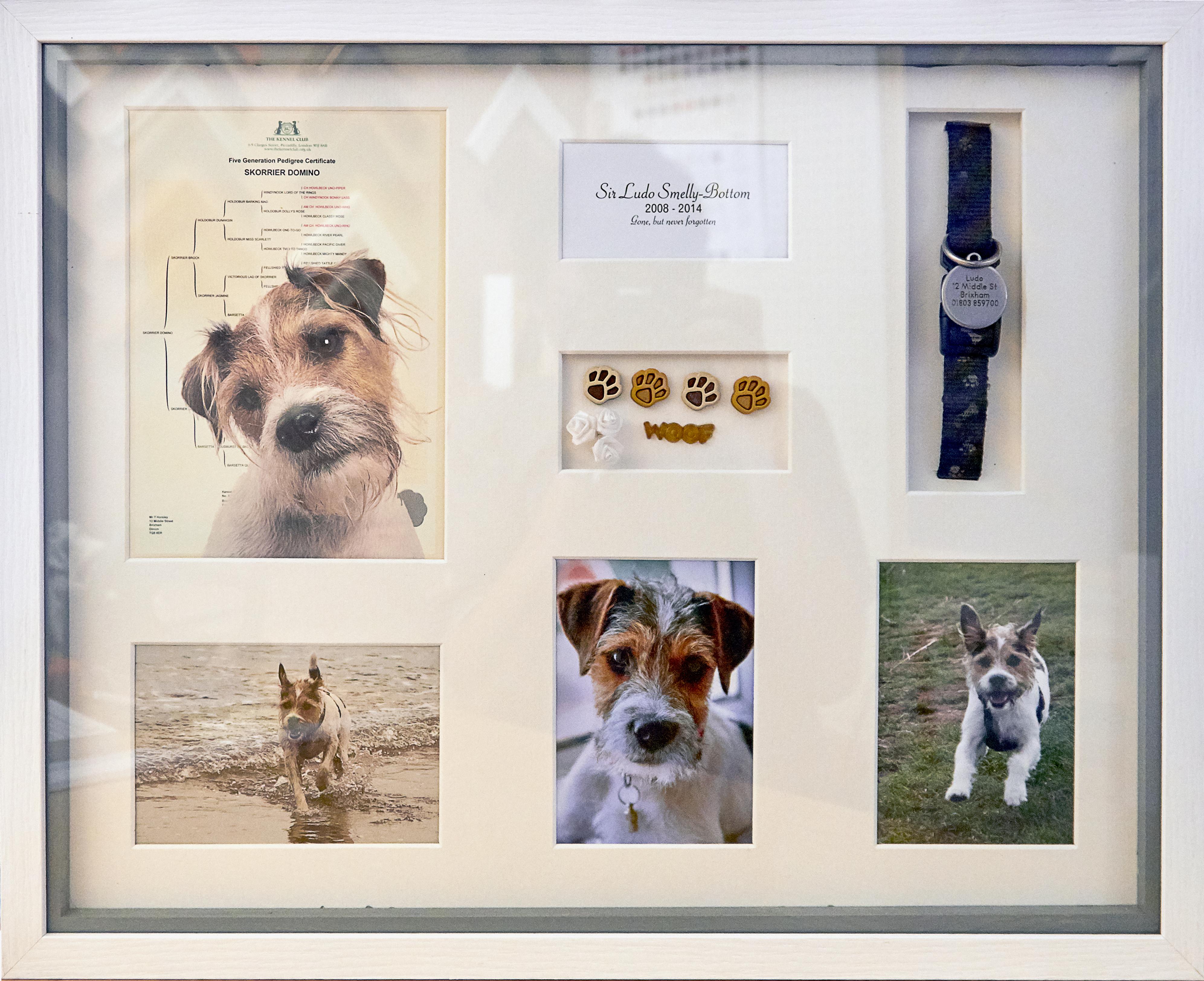 Memory Frames – Shooting The Dog